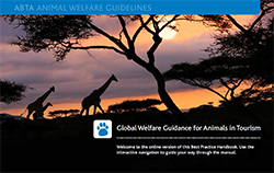 Global Welfare Guidance for Animals in Tourism cover