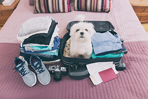 Dog sitting in a suitcase - ready to go on holiday